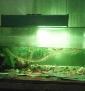 Аквариум с рыбками.