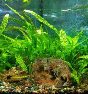 Продам аквариум juwel 190 литров