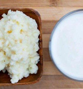 Кефирный молочный гриб