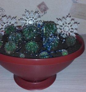 Букет из кактусов