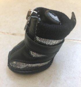 Новая обувь для собачек