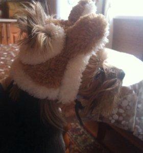 Шапка для собак (маленьких парод) с ушками..