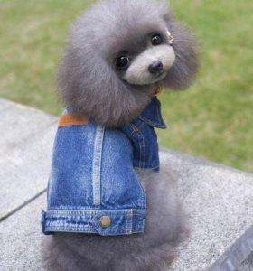 Одежда для собак  джинсовка