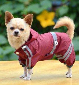 Одежда для собак.Дождевик бордовый