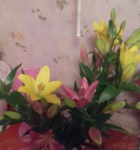 Цветы живые,свадебные украшения,букеты из игрушек