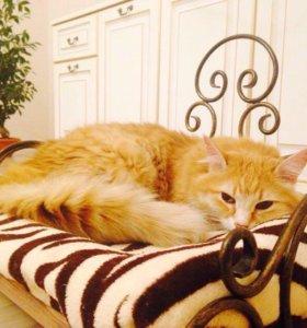Кованые диванчик для домашних животных