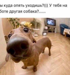 Погуляю с собакой