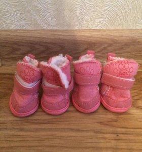 Зимние ботинки на собачку