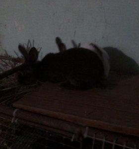 Распродажа молодняка кроликов а также мясо кролика