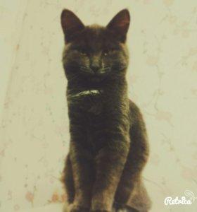 Котенок 6месяцев