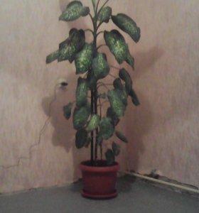 Комнатные растения 89521775067