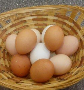 Яйцо домашней курицы самовывоз из Подрезково