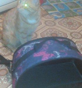 Сумка для кошек