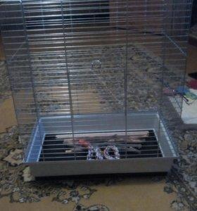 Клетка и кормушки для попугаев