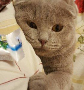 Молодой котик на вязку
