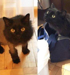 Стрижка кошек в Сыктывкаре 55-97-87