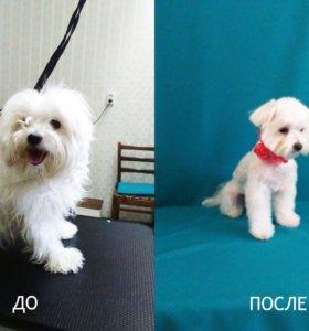 Стрижка собак в Сыктывкаре 55-97-87