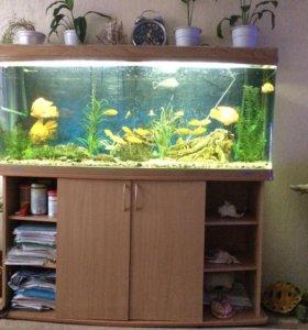 Продам аквариум и все что на фото