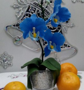 Миниатюрная орхидея фаленопсис