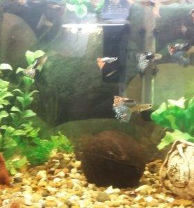 Продаю аквариумныерыбки рыбок