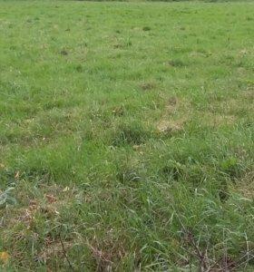 Отличный земельный участок 12 соток в СНТ