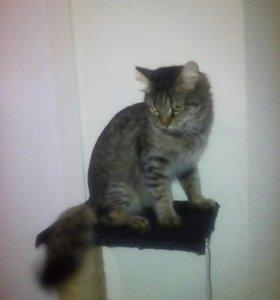 Котик ищет даму.