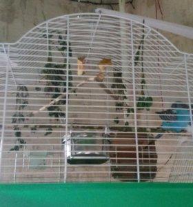 Попугаи волнистые с клеткой и всем необходимым