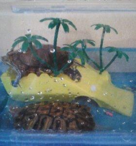 Аквариум с черепашками