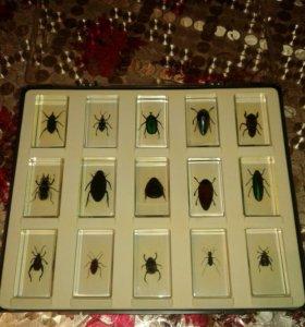 Насекомые(жуки)