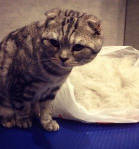 Вычесывание кошек
