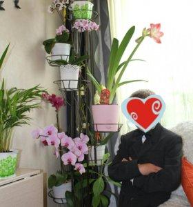 Полка для цветов, подставка для комнатных растений