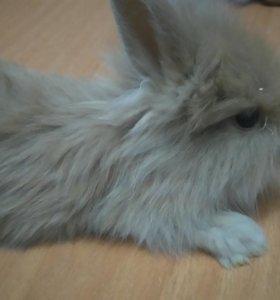 Продаём декоративных кроликов