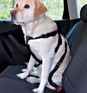 Авто. ремень и шлейка для собак