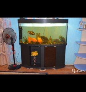 Продается аквариум на 220 лит.