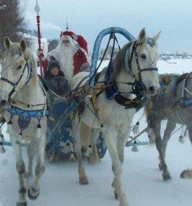 Поездки к Деду Морозу