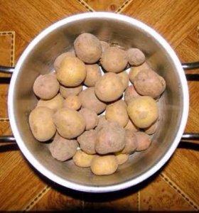 Картофель мелкий