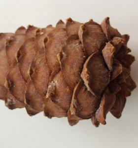 Шишка кедровая с орешком