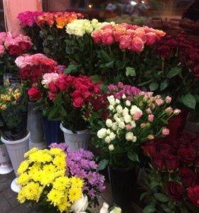 Розы Эквадор 60см