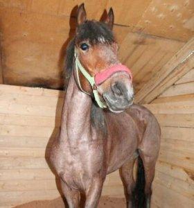 Постой для лошадей и пони.