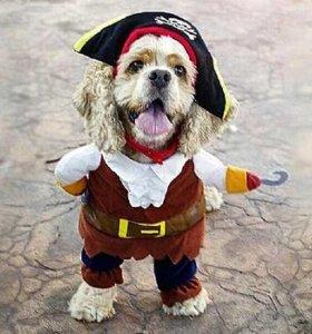 Костюм Пират для питомца