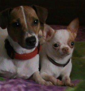 Передержка собак мелких пород