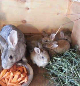 Продам кроликов или поменяю