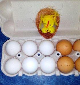Яйцо от домашних курочек