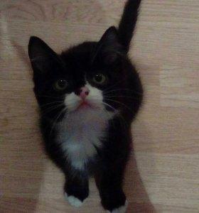 Отдам котенка в хорошие руки))