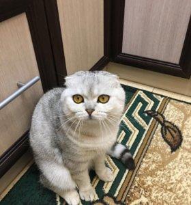 котик( вязка)