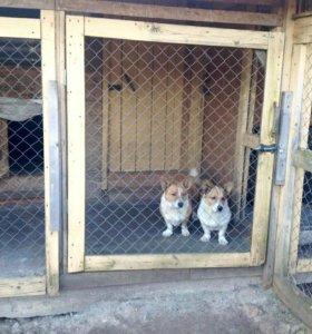 Передержка(гостиница) для сокак и кошек