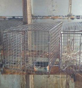 Клетки для кроликов