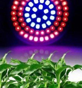 Фитолампы для роста растений
