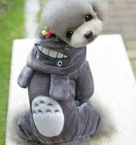 Костюм Тоторо на маленьких собак.