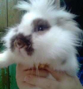 🐰Декоротивные кролики 🐰🐇